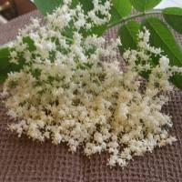 Gelatina ai fiori di sambuco
